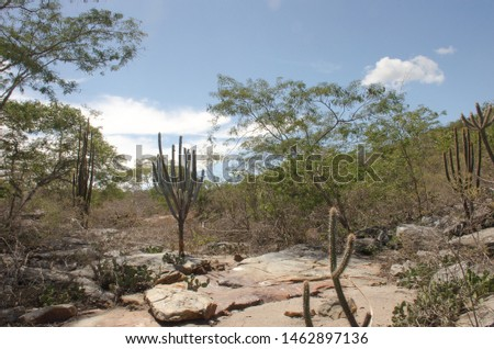 Caatinga is a type of desert vegetation, and an ecoregion characterized by this vegetation in interior northeastern Brazil. Cereus jamacaru, known as mandacaru  is a cactus common in this vegetation.  #1462897136