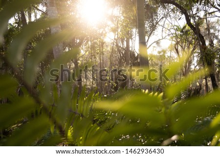 beautiful forest background at sunset #1462936430