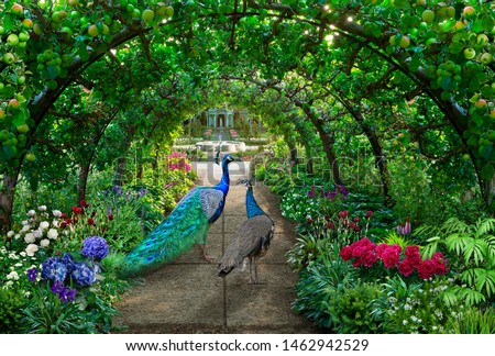 A couple of peacocks walks through a green garden full of irises and hydrangeas under an arched pergola with green apples hanging on it #1462942529