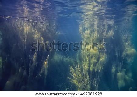 underwater green landscape / nature underwater eco ecology lake, wild diving