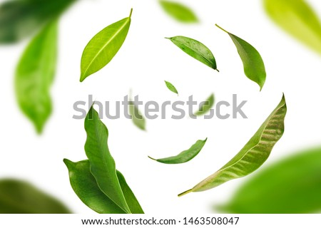 Vividly flying in the air green tea leaves isolated on white background 3d illustration. Food levitation concept. High resolution image #1463508047