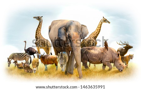African safari and Asian animals in the theme illustration, filled with many animals, a white border image Royalty-Free Stock Photo #1463635991