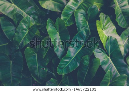 Green plants or green leaves in the tropics caused by planting in the background #1463722181