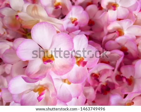 Pink orchid flowers group, Picture background style.