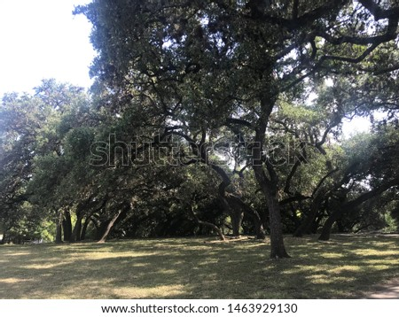 Day at the park picture of oak trees #1463929130
