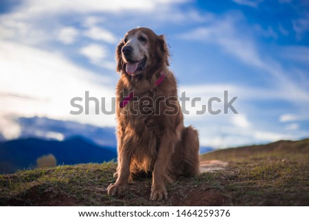 tender labrador breed dog in the mountain #1464259376