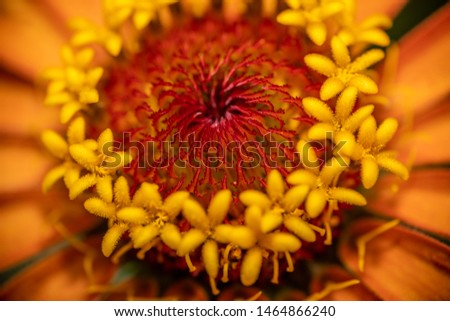 Closeup of a flower in the garden #1464866240