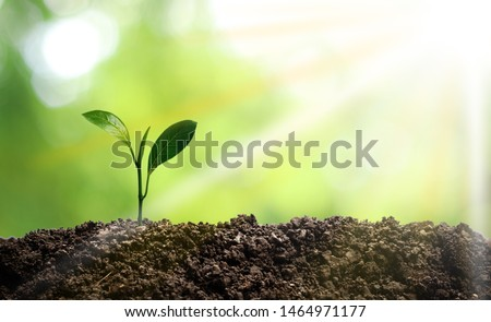 Small trees are growing in the middle of the sun, warm in the morning, the concept of saving the world and reducing global warming. #1464971177