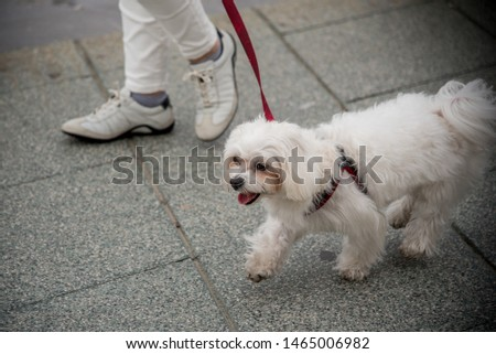 Happy dog on a walk in the city, Soft focus #1465006982