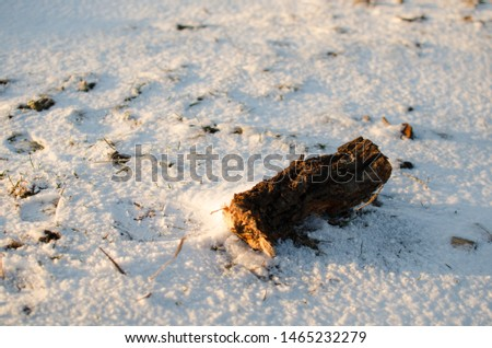 Chunk on the snowed meadow #1465232279