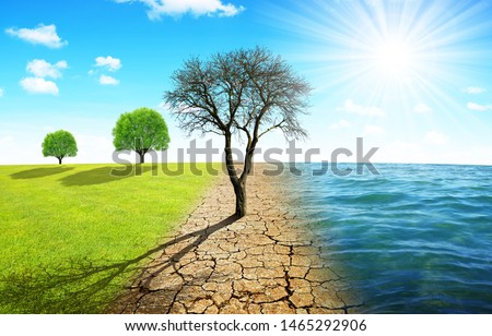 Dead tree in dry country with cracked soil and meadow with sea. Concept of change climate or global warming. #1465292906
