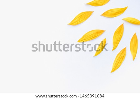 sunflower petals, sunflower petals on a white background, yellow petals, sunflower, sunflower petals background #1465391084