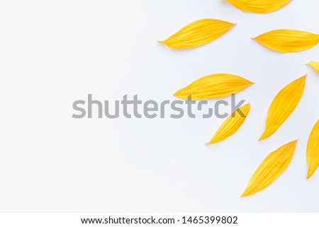 sunflower petals background, yellow petals on a white background, sunflower petals, sunflower petals on a white background #1465399802