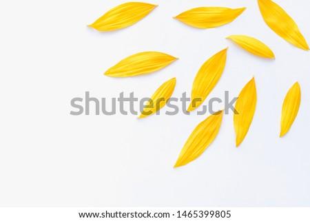sunflower petals background, yellow petals on a white background, sunflower petals, sunflower petals on a white background #1465399805