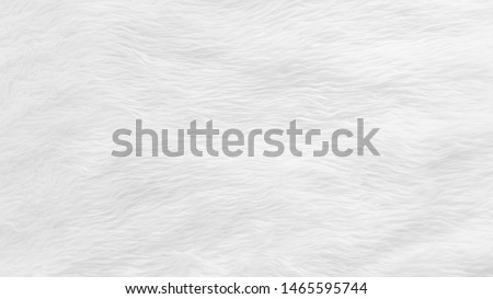 Fur background with white soft fluffy furry texture hair cloth of sheepskin for blanket and carpet interior decoration Royalty-Free Stock Photo #1465595744