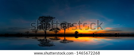 Panorama silhouette tree in africa with sunset.Tree silhouetted against a setting sun reflection on water.Typical african sunset with acacia trees in Masai Mara, Kenya. #1465672268