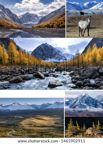 Collage from photos with space for text. Autumn landscape with Aktru river and peak Karatash, Chuya river, Kurai steppe and mountains, wild horses and larch forest. Altai Mountains. Siberia. Russia  #1465902911