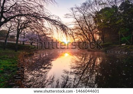 Morning light, nature and beauty of Sakura in Japan #1466044601