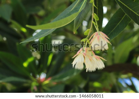 white flower hang down from the tree #1466058011
