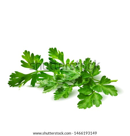 Fresh green plant, nutritious, tasty green parsley. Vector illustration. Vegetables ingredients in triangulation technique. Parsley low poly. #1466193149