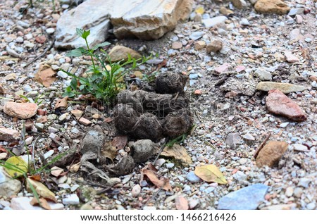Leopard droppings found in the wild.