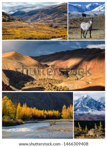 Collage from photos. Gold Autumn landscape with  North Chuya mountains ridge, Valley of Kyzylshin river and Altai mountains, wild horses and larch forest.  Siberia. Russia  #1466309408