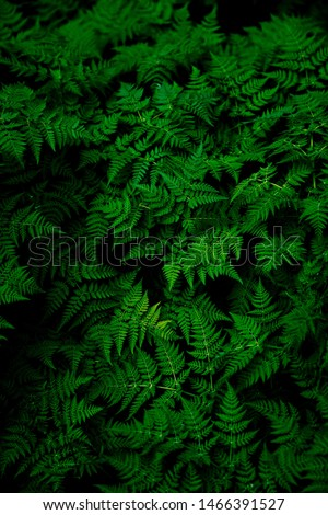 Image of dark grean leaves of a tree. #1466391527