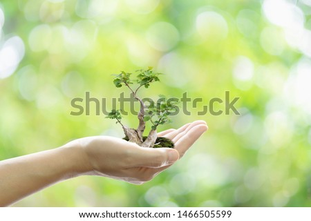 Environmental ecology save the world. Hand holding growing tree on green bokeh background. #1466505599
