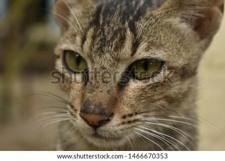 That cute eyes of cute cat #1466670353