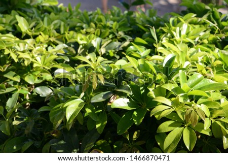 Green leaves closeup, sunny day nature background. #1466870471