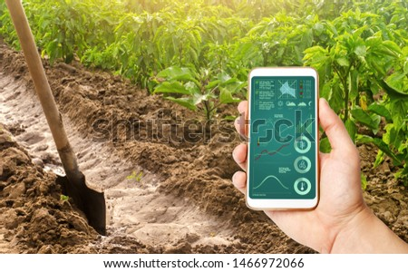 A hand is holding a smartphone with infographics on the background of a pepper plantation and irrigation channel. traditional method of watering the fields. Cultivation, care of the pepper plantation #1466972066
