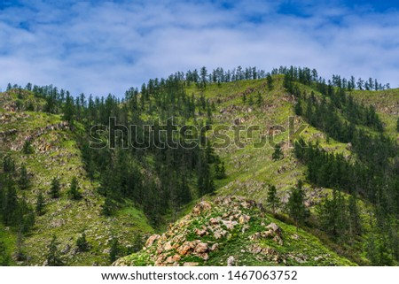 The slopes of the Altai mountains covered with bushes and coniferous forest. Altai Republic, South Siberia, Russia #1467063752
