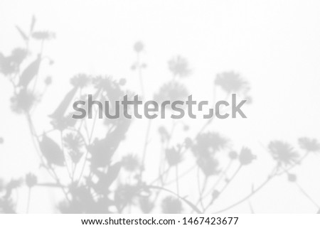 Gray shadows of the flowers and delicate grass on a white wall. Abstract neutral nature concept background. Space for text. Blurred, defocused. #1467423677