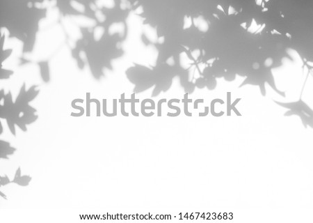 Gray shadow of the hawthorn tree leaves on a white wall. Abstract neutral nature concept blurred background. Space for text. #1467423683
