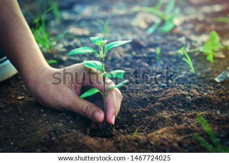 Hands that are planting trees in the soil, Side view #1467724025