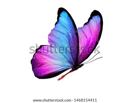 multicolored butterfly for design. isolated on white background Royalty-Free Stock Photo #1468154411