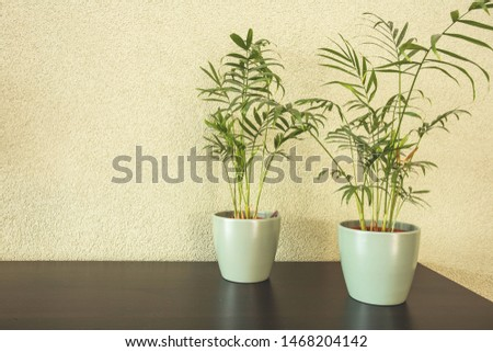 Home plants with green leaves in a ceramic pot on wooden table, retro design #1468204142