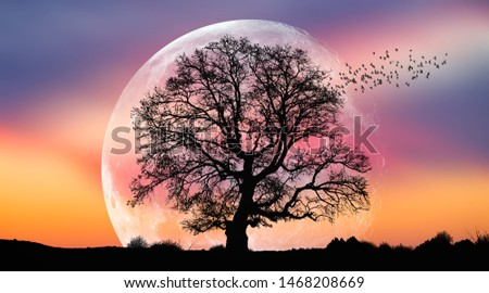 """Silhouette of birds with lone tree in the background big full moon at amazing sunset """"Elements of this image furnished by NASA"""""""