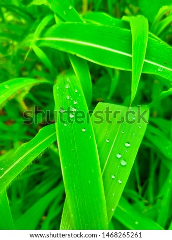 A picture of a rain water drops on the leaves of the plant. This picture describes the nature's beauty
