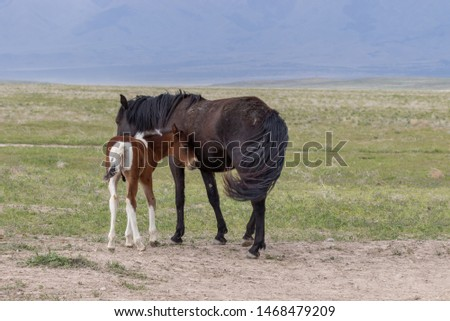 Wild Horse Mare and Foal in Utah in Spring #1468479209