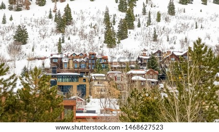 Panorama Scenic winter view of lush coniferous trees on a mountain covered with snow #1468627523
