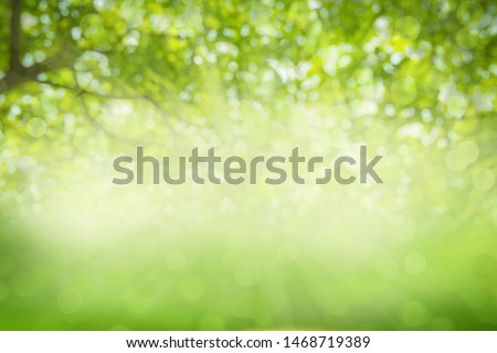 Green texture background, Photos blurred and bokeh under the tree, Fresh nature healthy or bio concept. #1468719389