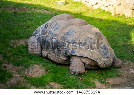 Close up tortoise resting in the garden, zoo #1468755194