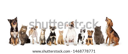 Row of cats and dogs sitting looking up into blank white web banner  Royalty-Free Stock Photo #1468778771