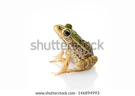 Frog isolated on a white background, and close-up pictures   #146894993