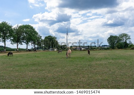 Donkeys and mules. Pen for donkeys and mules in countryside in Europe. Cute donkeys walking and eating in the pen in the village on green grass. Peaceful picture of Pets on an eco farm at summer day.