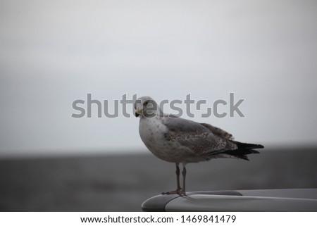 Bird. Overcast sky, overcast day #1469841479