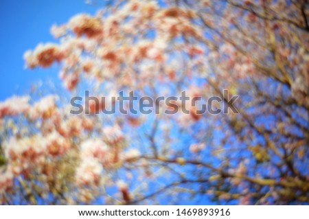 Abstract blurred nature flower bloom tree branch with sunrise background. #1469893916