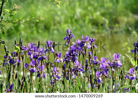 purple flowers in the park for background #1470009269