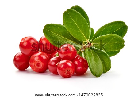 Fresh lingonberry with leaves, isolated on white background. #1470022835